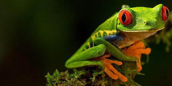 Soyez vigilant aux signes précurseurs du burn out pour ne pas finir comme la grenouille dans la casserole